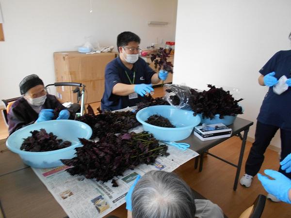 「沢山の梅で梅シロップ作り」
